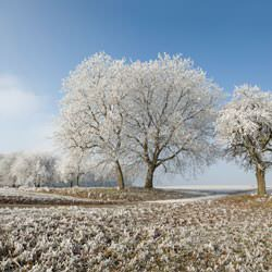 Frost covering trees and a grassy field in Powell
